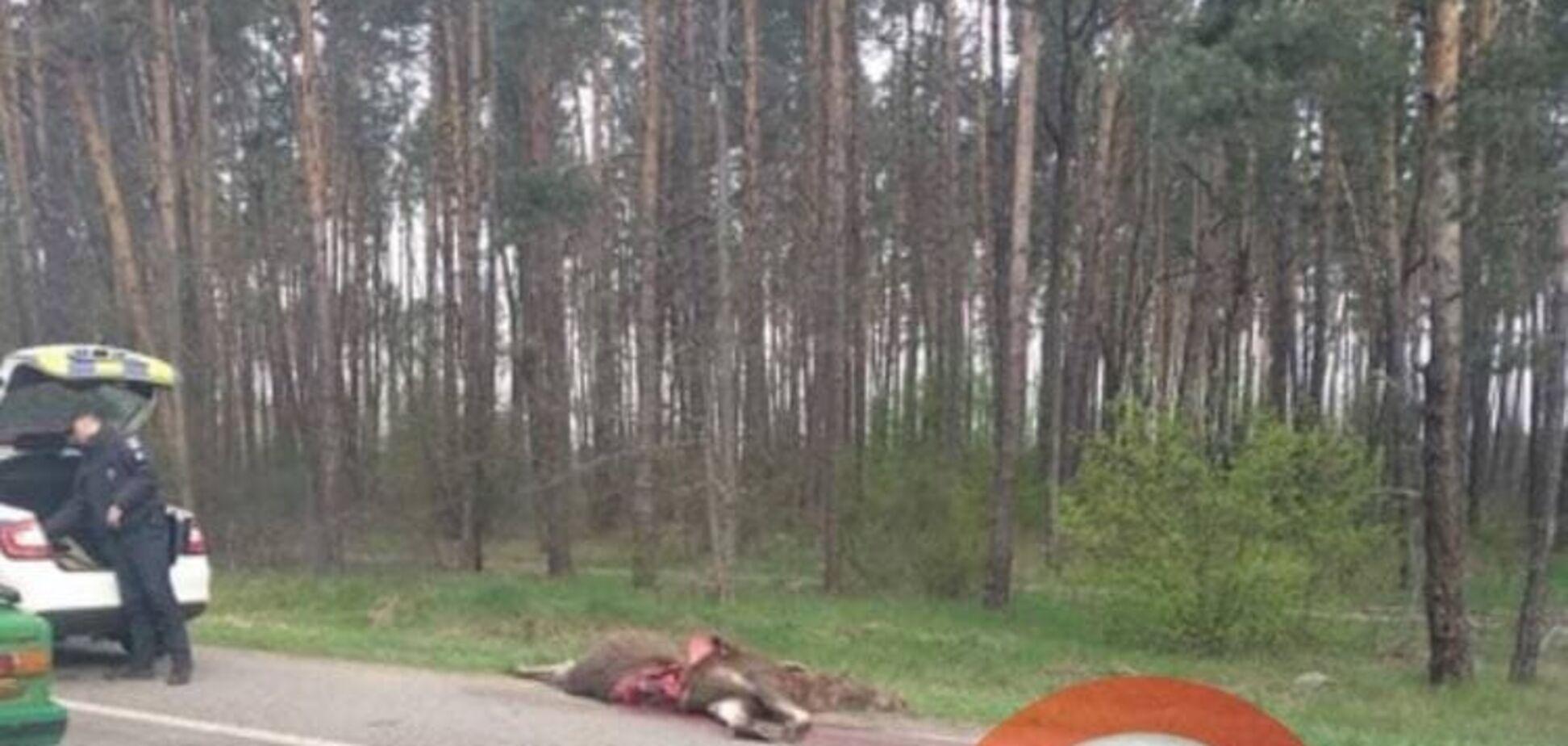 В Киеве на Житомирской трассе иномарка сбила лося