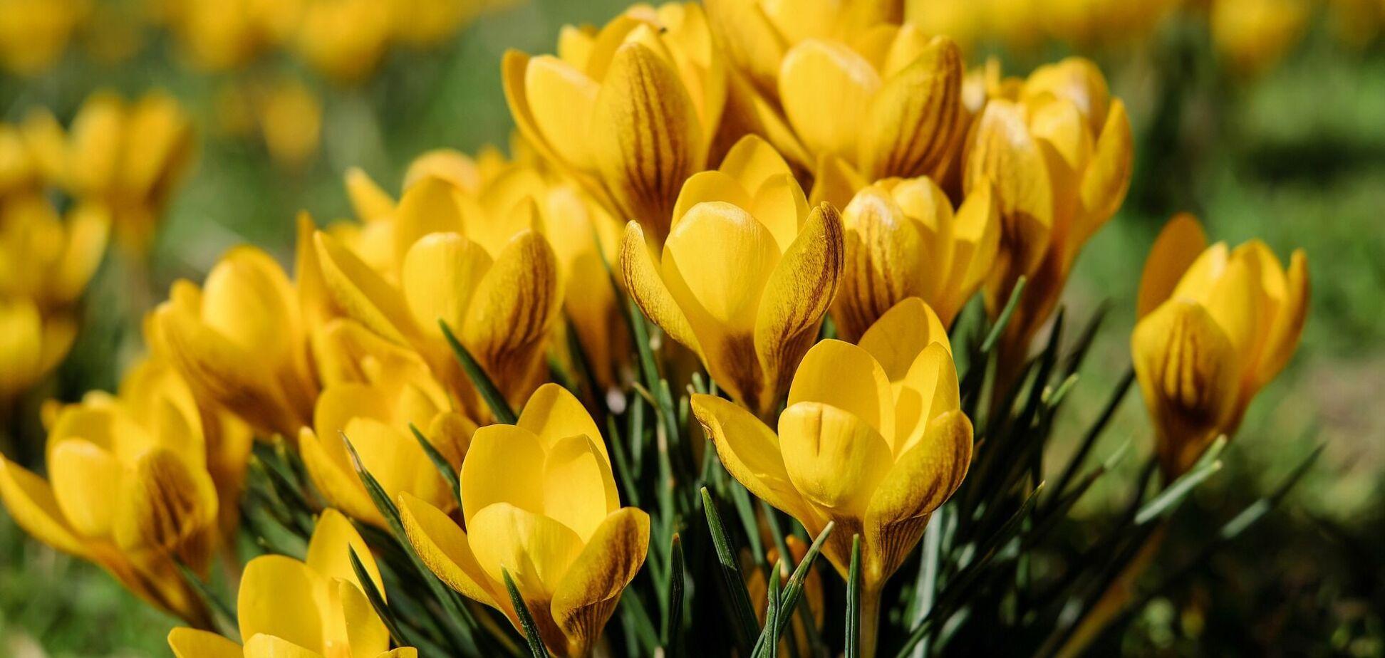 6 апреля: праздники, приметы и именинники