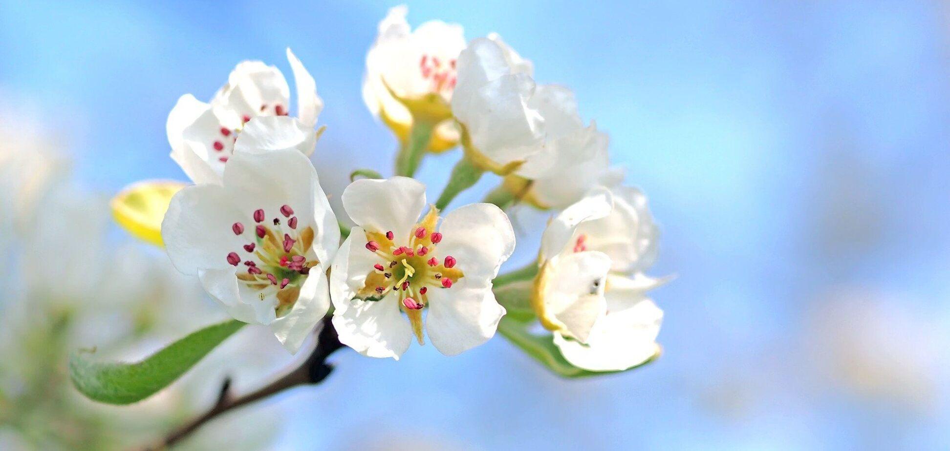 12 апреля: праздники, приметы и именинники
