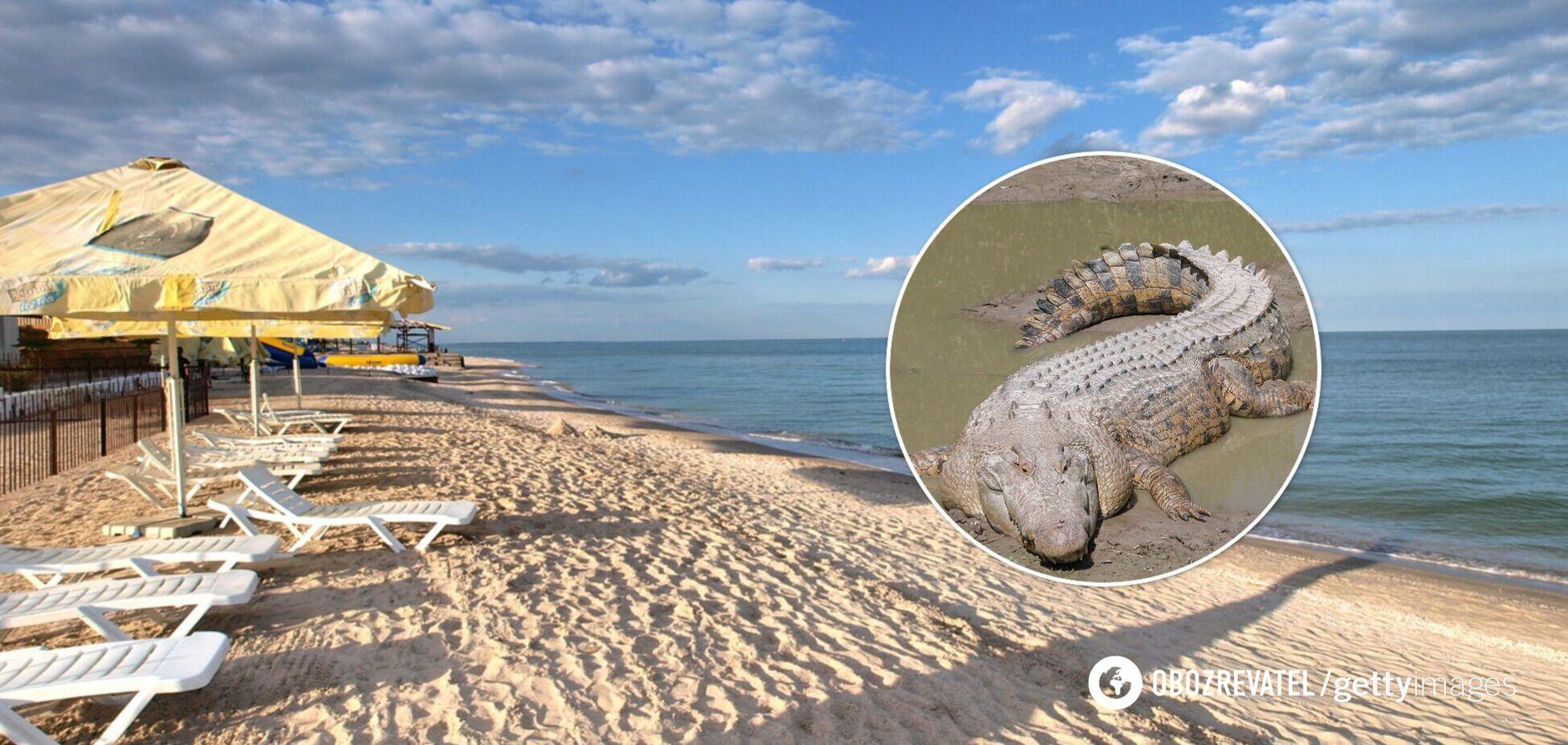 На березі Азовського моря знайшли мертвого крокодила. Фото