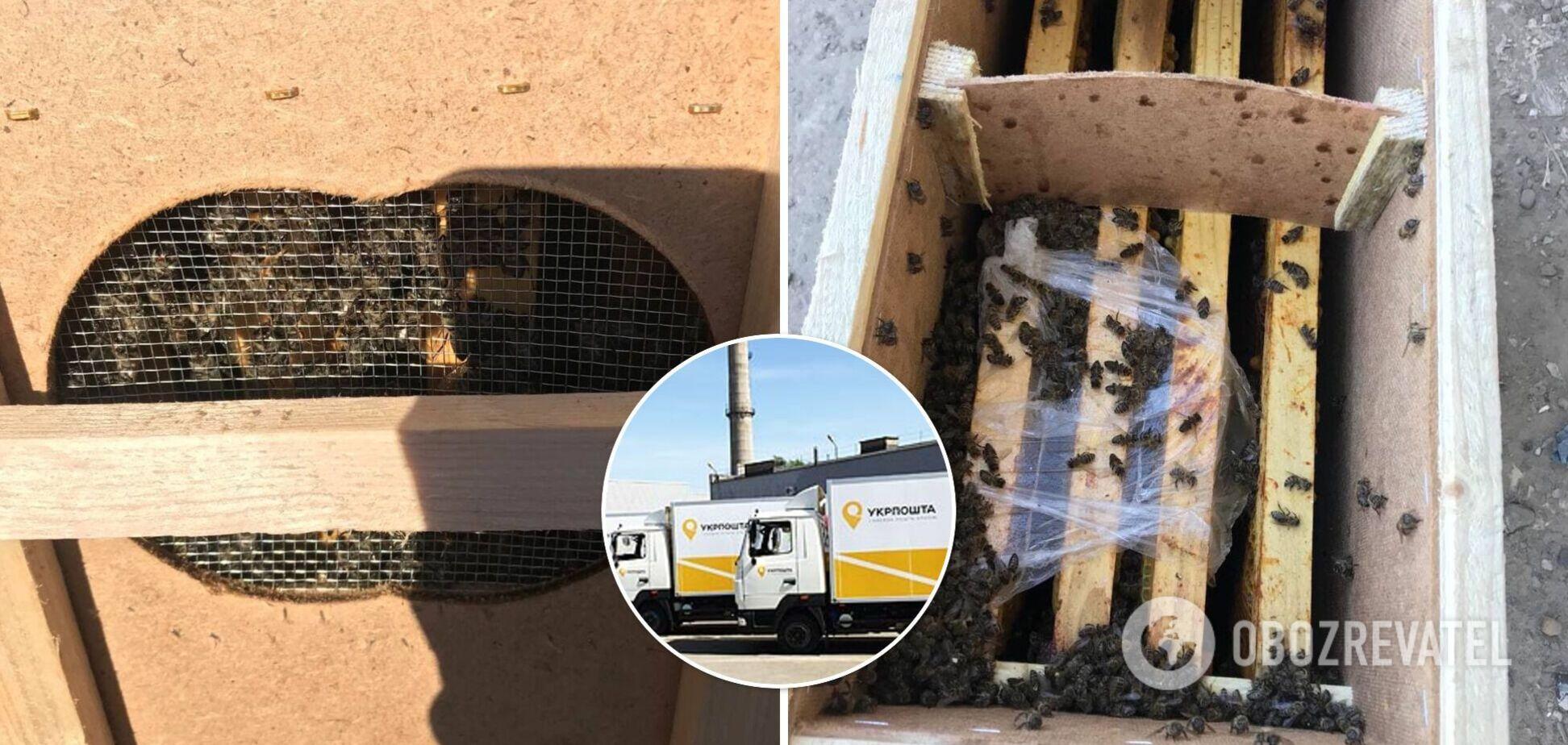 В 'Укрпошті' заявили, що бджоли в їхній вантажівці загинули через погоду