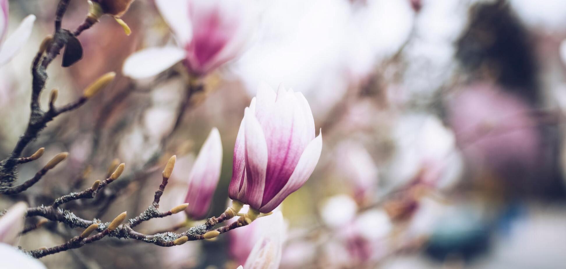 15 травня: свята, прикмети й іменинники