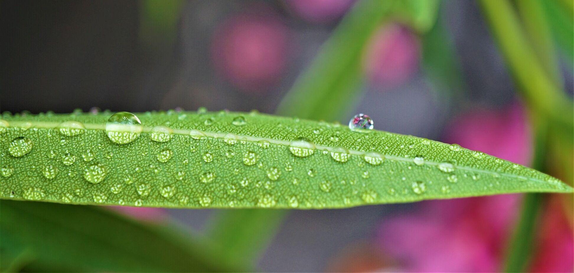 Весняний дощ