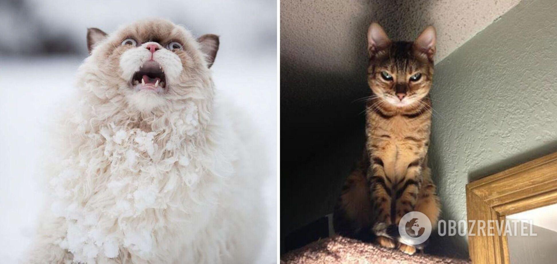Коты демонстрируют искренние эмоции