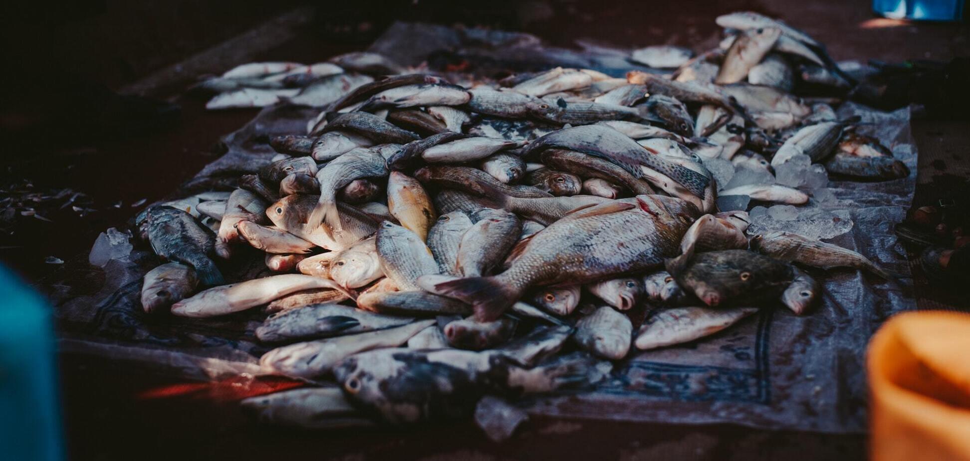Какая рыба может вам сильно навредить