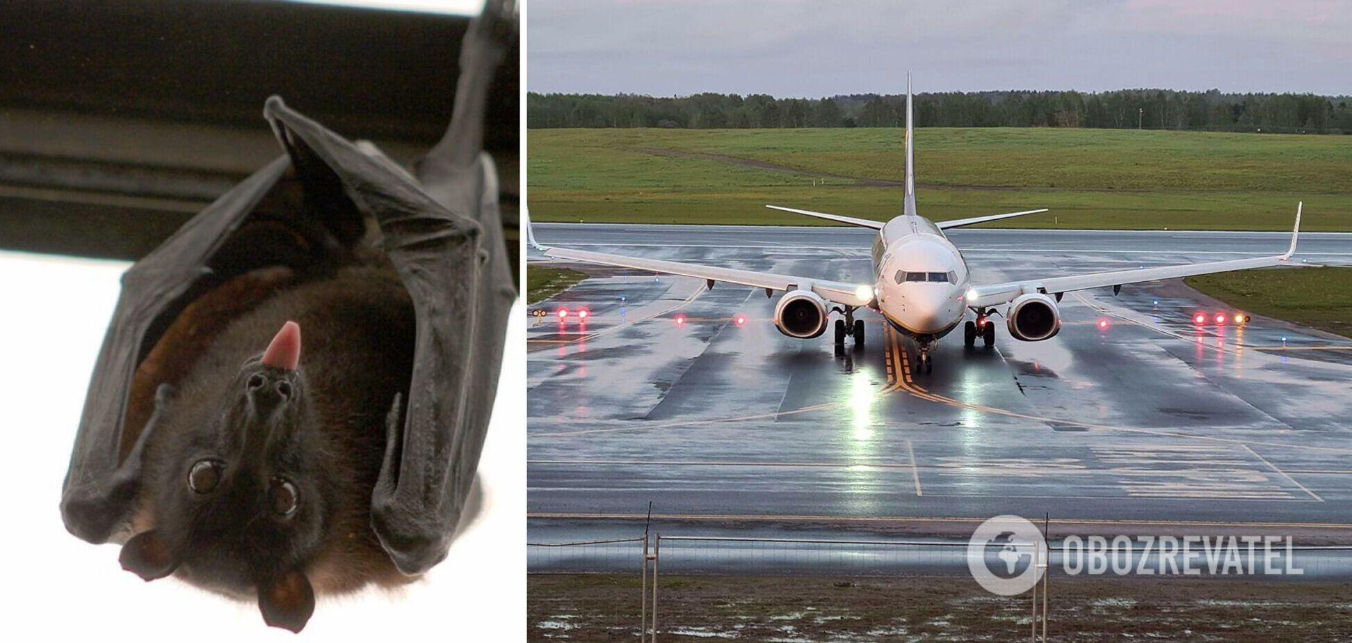 В Индии экстренно посадили самолет из-за летучей мыши на борту. Видео