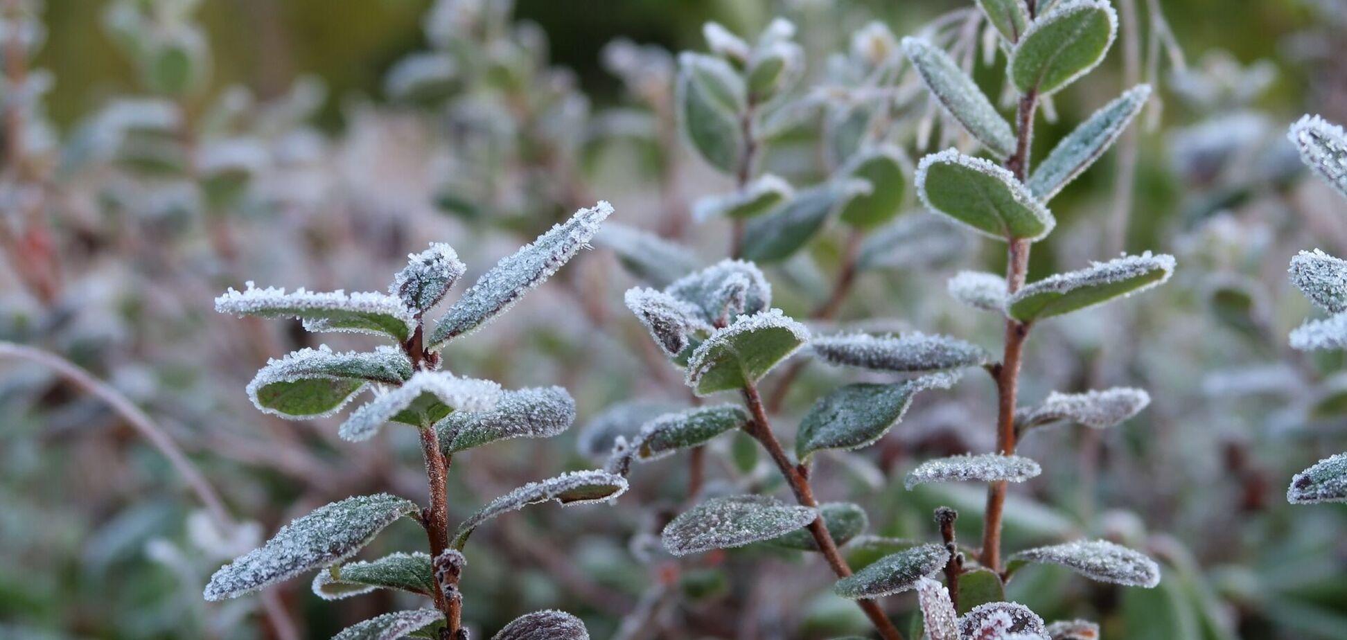 В Украину вернутся заморозки: появился новый прогноз погоды на вторник. Карта
