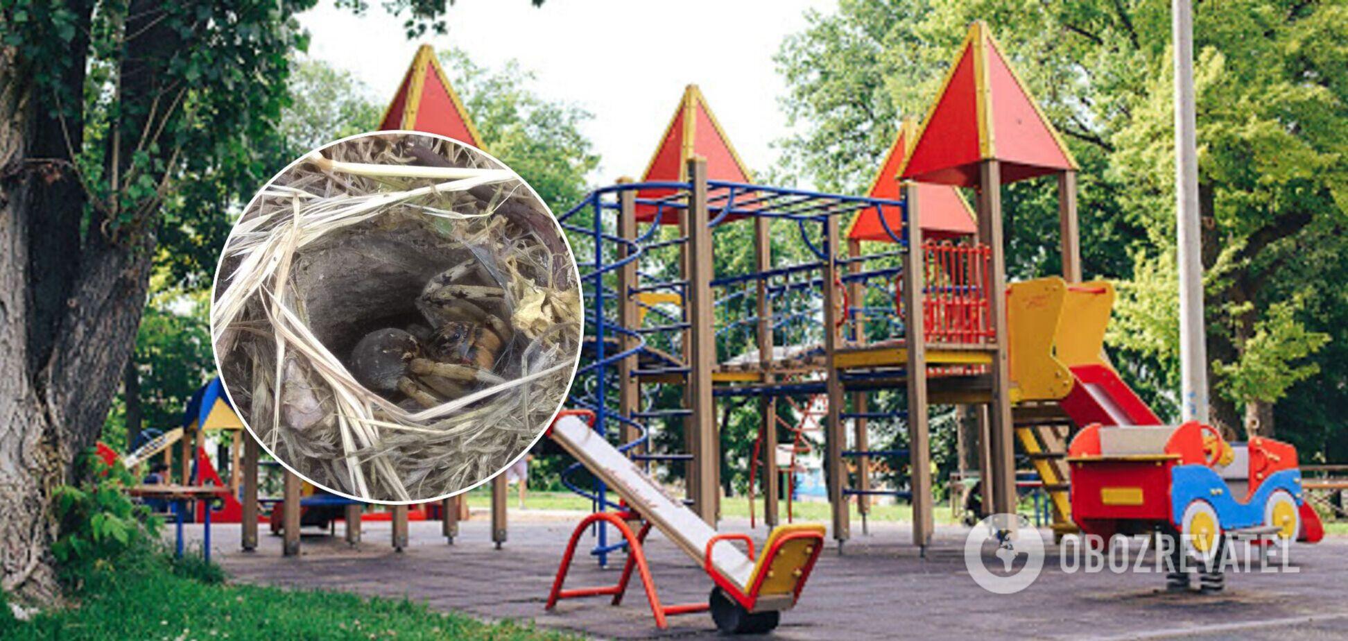 Паук на детской площадке