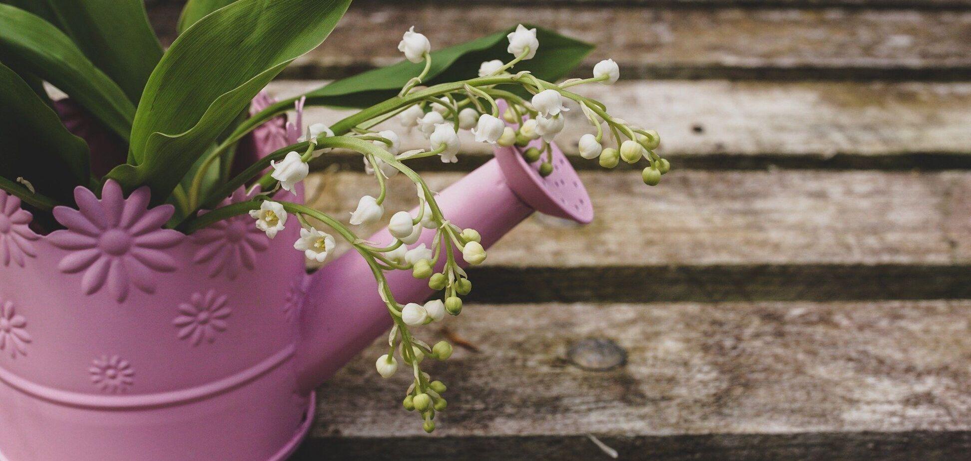 Травневі квіти