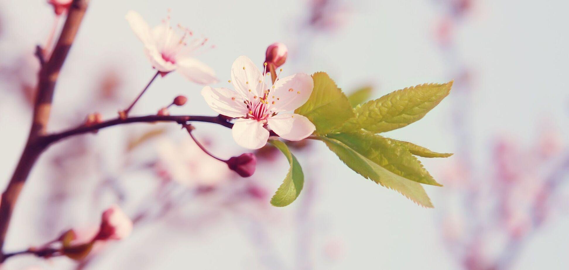6 мая: праздники, приметы и именинники