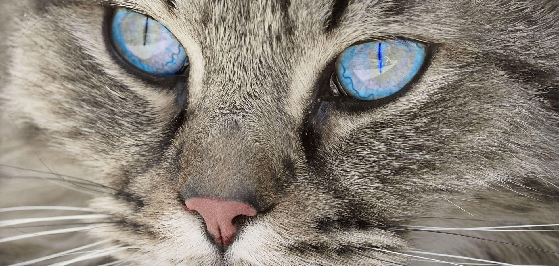 Кішка з 'людським обличчям' здивувала мережу