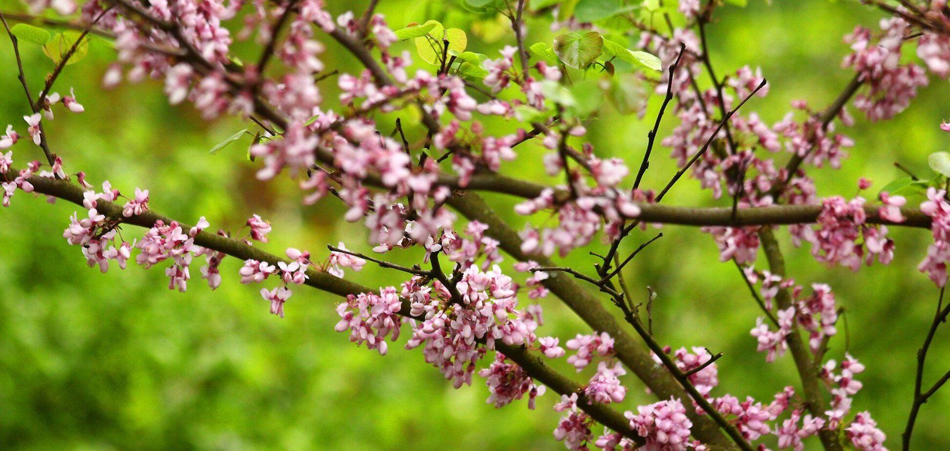 7 травня: свята, прикмети й іменинники