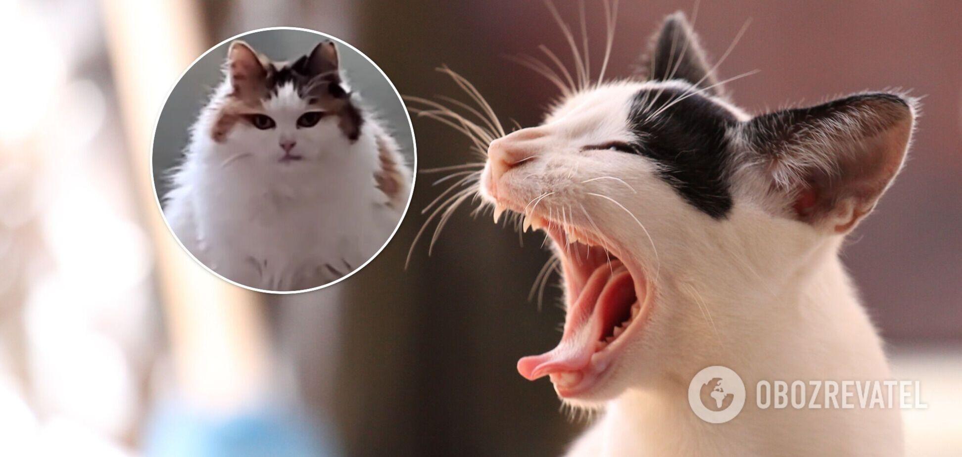 кішка Мілка