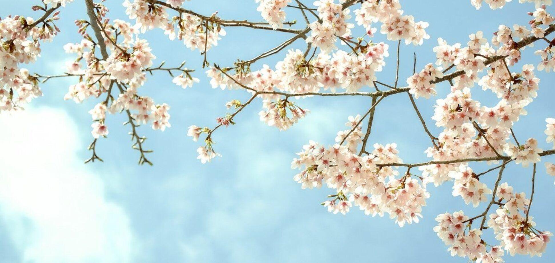8 мая: праздники, приметы и именинники