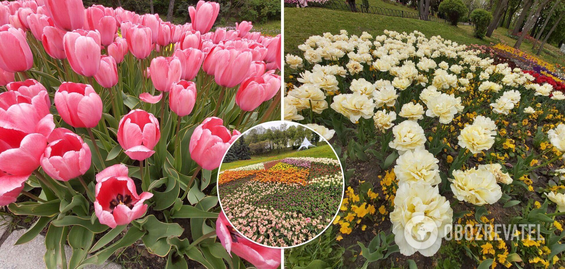 У Києві на Співочому полі відкрили унікальну виставку тюльпанів. Фоторепортаж