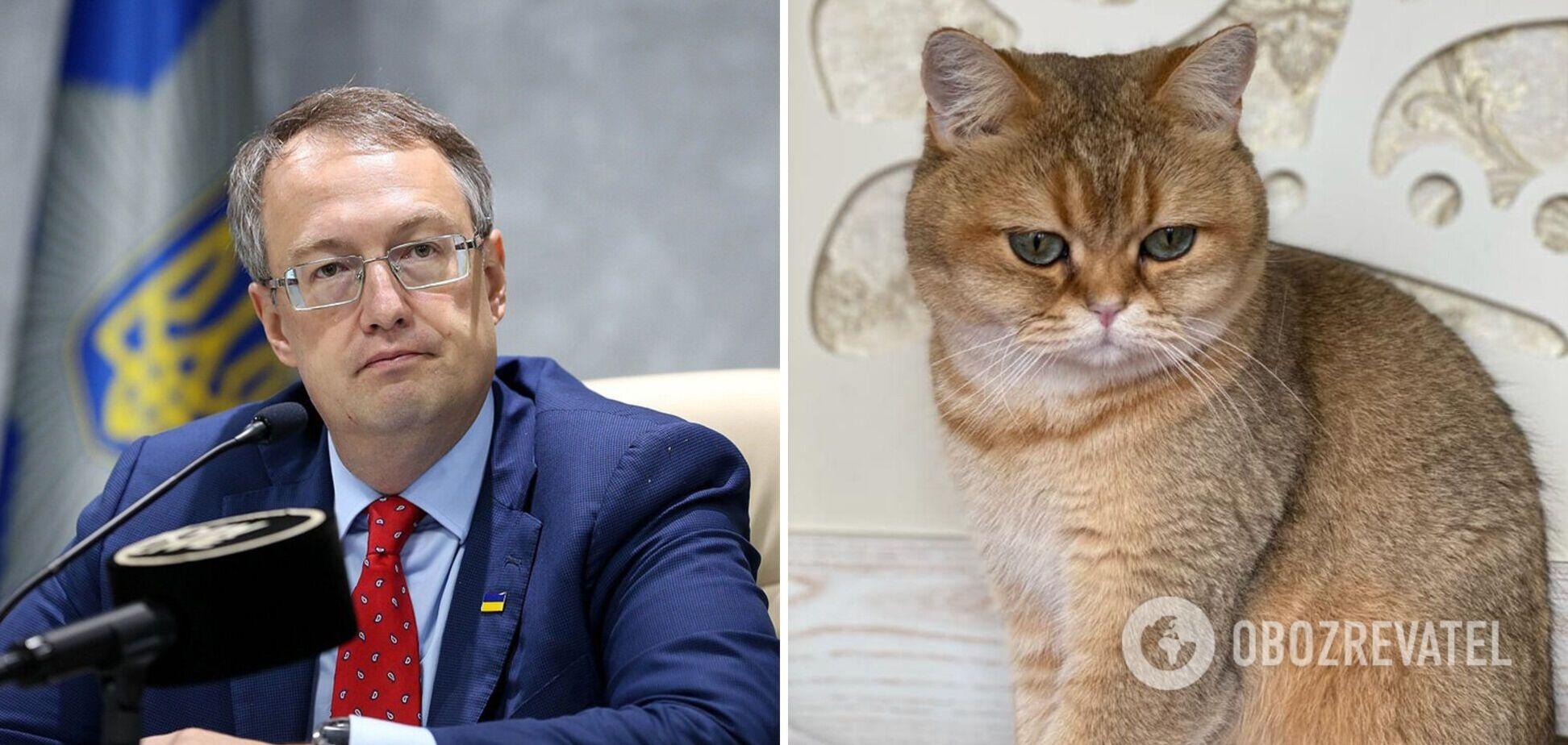 Геращенко показав свого кота, який став зіркою ефіру на ТБ. Фото