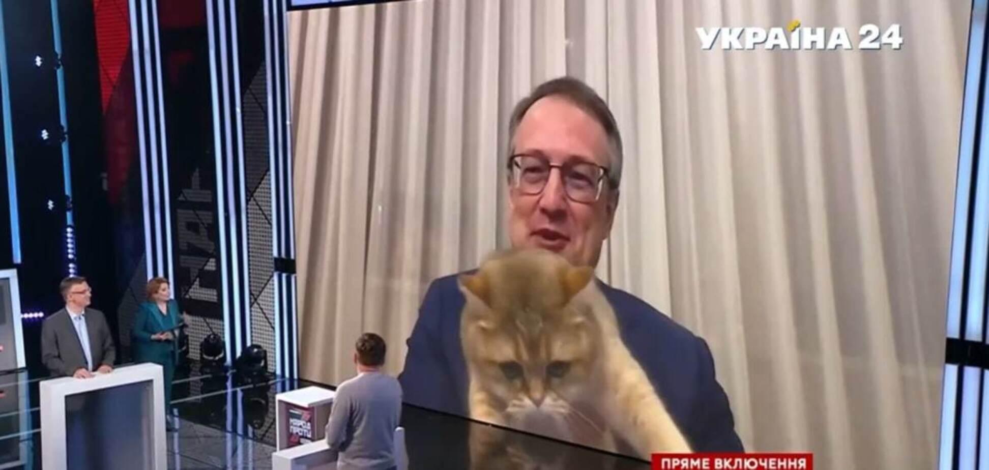 Домашній кіт перервав виступ Геращенка в прямому ефірі. Курйозне відео