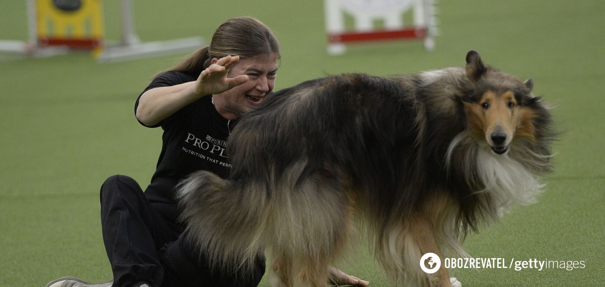 Складено топ найагресивніших порід собак