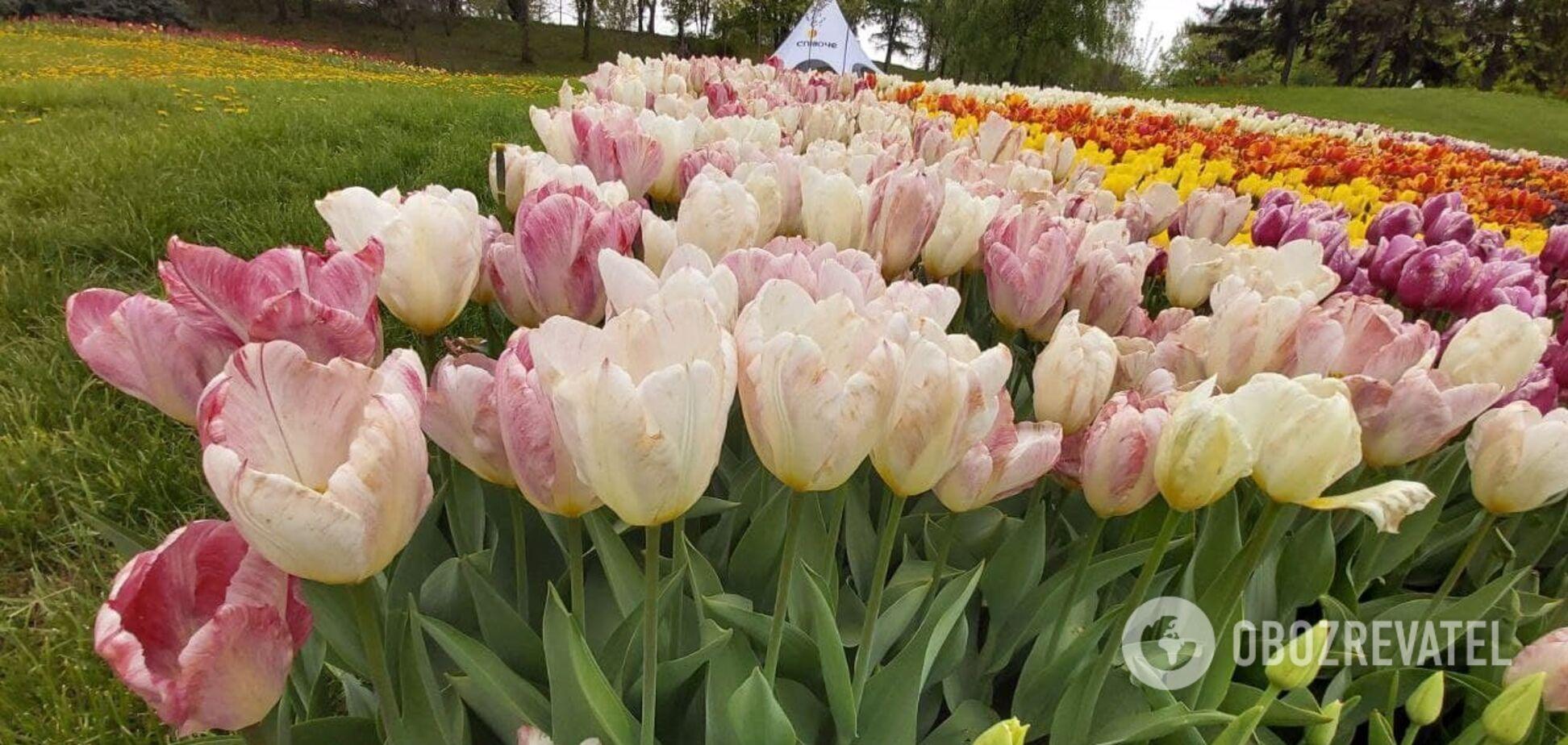 В Киеве на Певческом поле открылась выставка тюльпанов