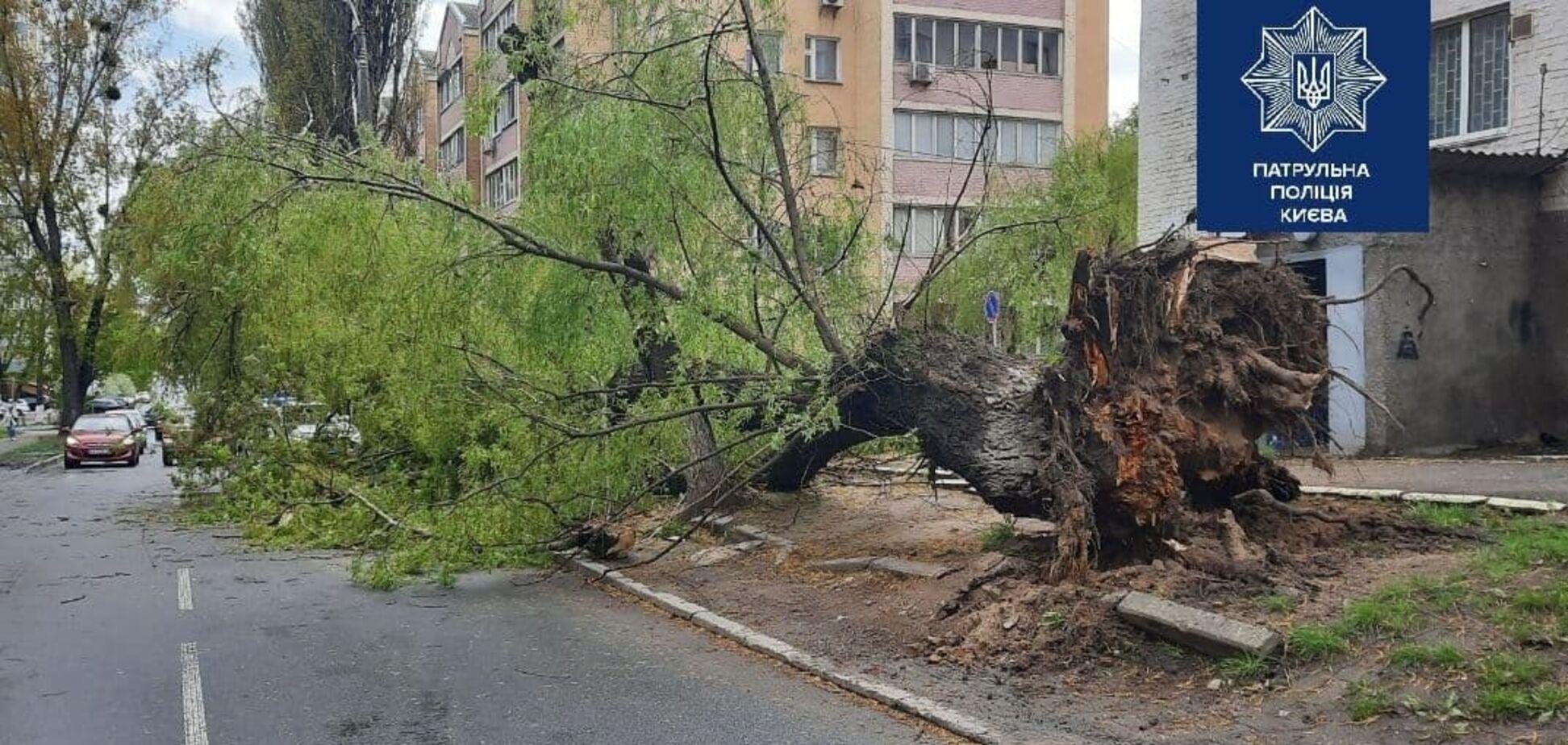 На вулиці Ніжинській у Києві впало дерево