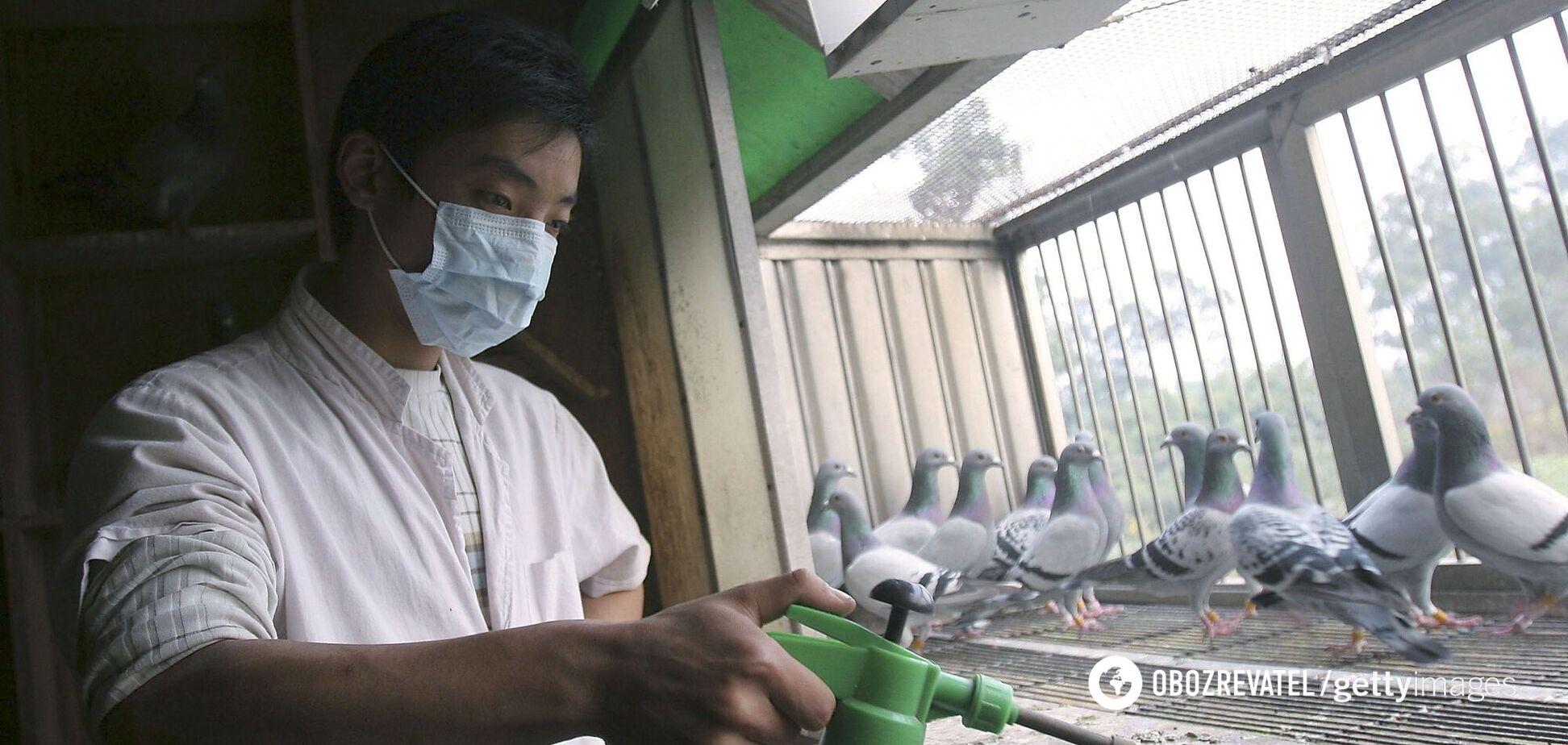 В Китае сообщили о первом в мире случае заражения новым штаммом птичьего гриппа