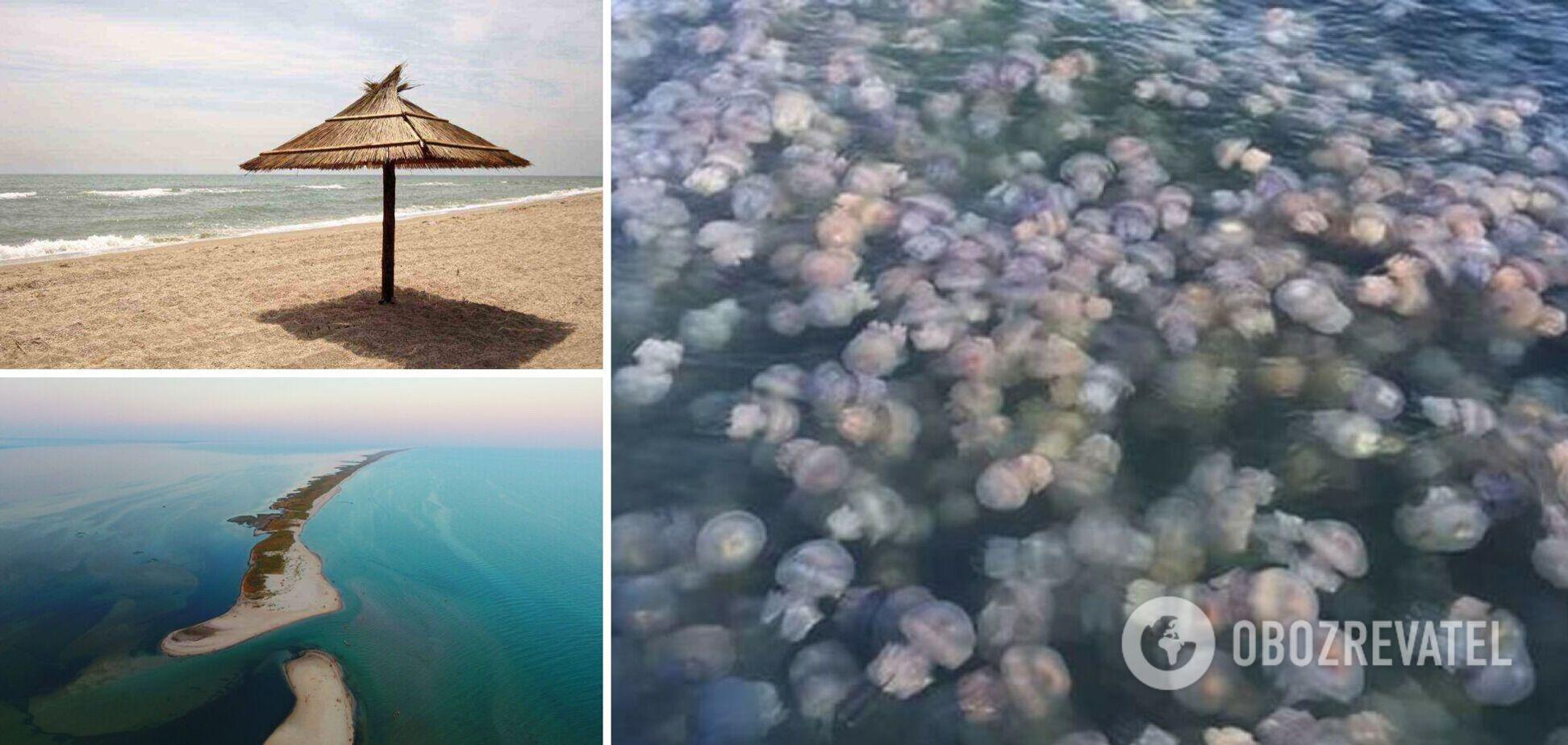 Кілька років поспіль на Чорному і Азовському морях було нашестя медуз