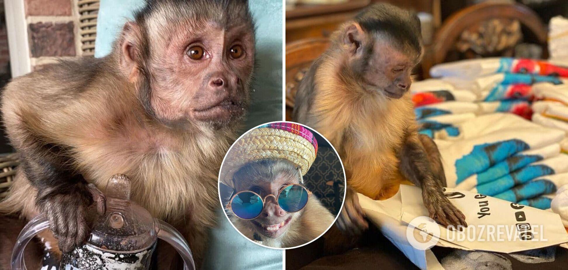 Умерла известная обезьяна с 17 млн подписчиков в TikTok: чем она знаменита