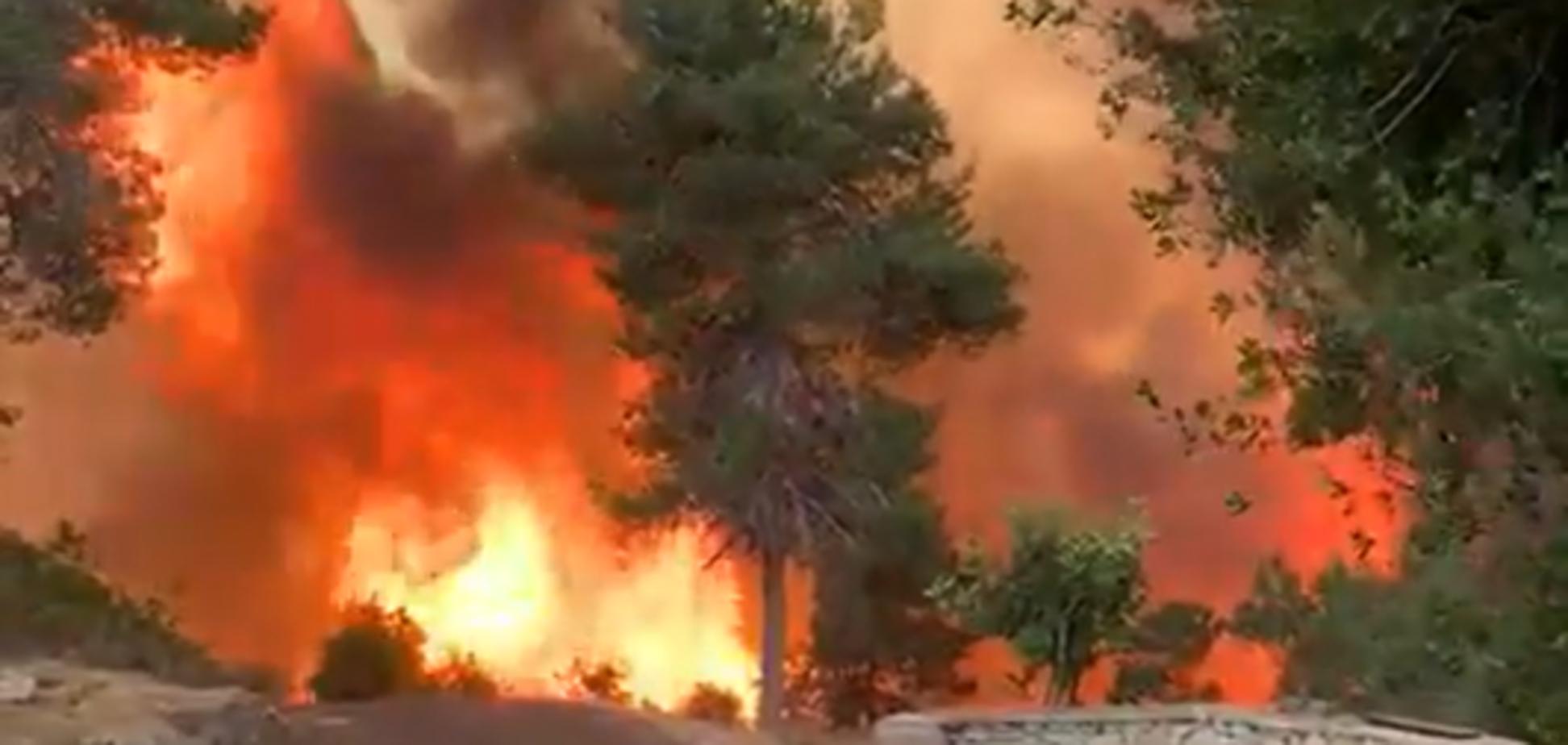 В Израиле вспыхнули лесные пожары
