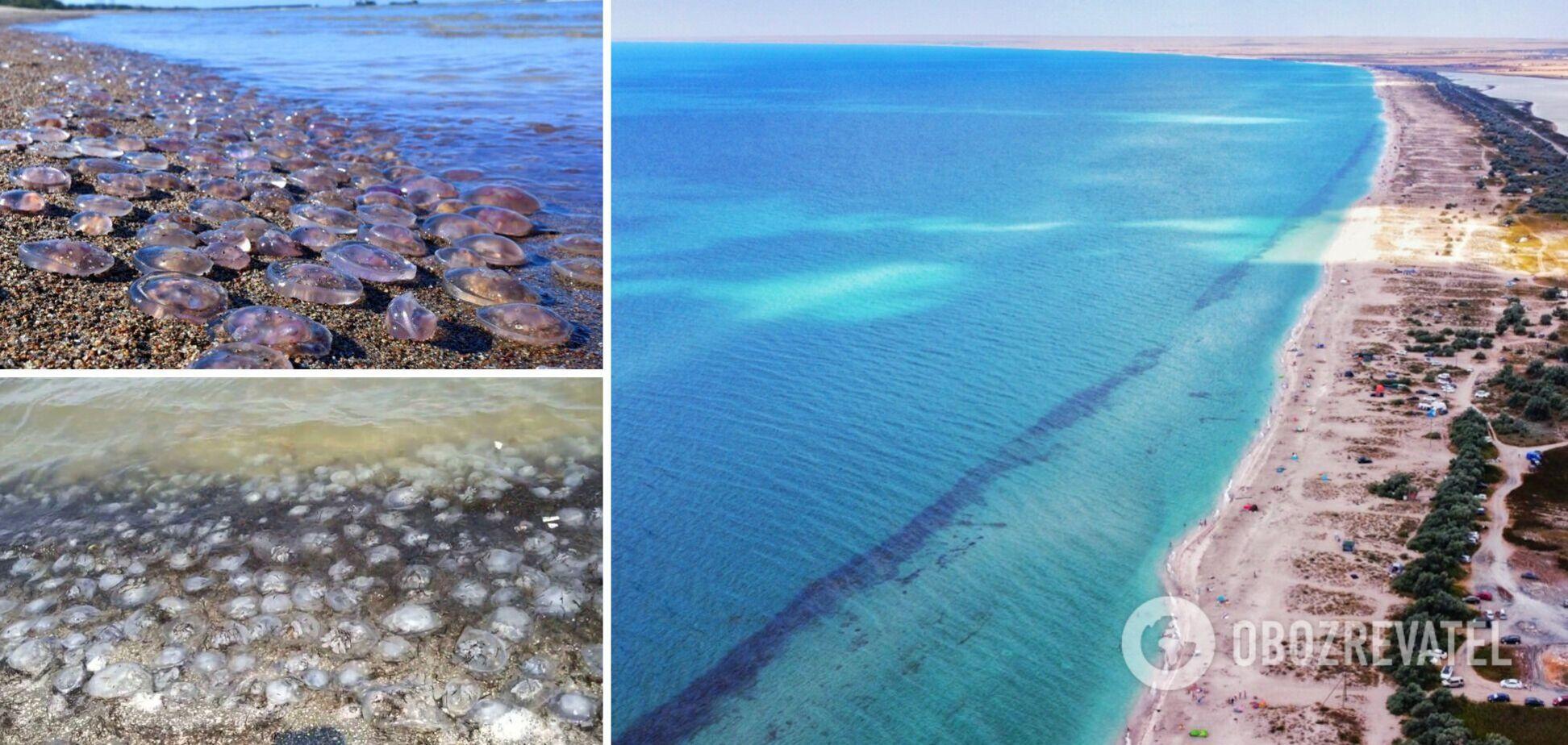 В Черном море уже появляются медузы