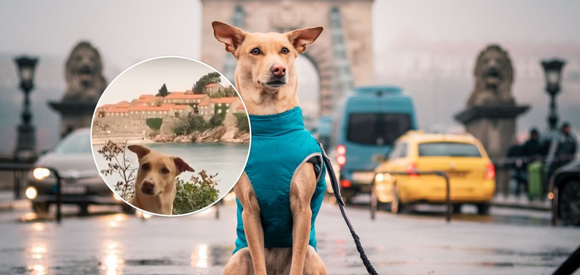 Собака-рекордсменка з Києва подолала 55 тисяч кілометрів і побувала в 30 країнах. Відео
