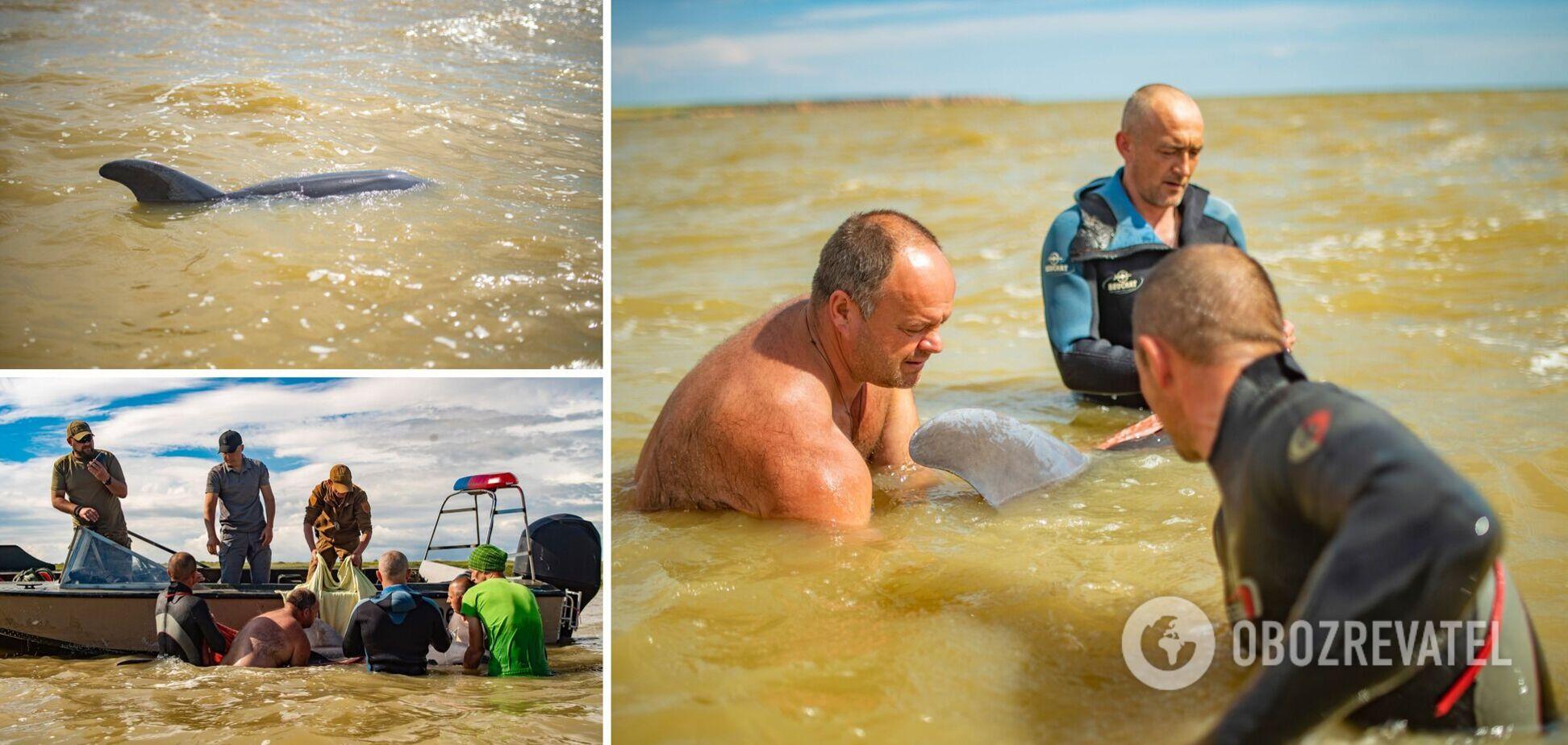 Хвилі не давали дельфіну відійти вглиб Дніпровської затоки