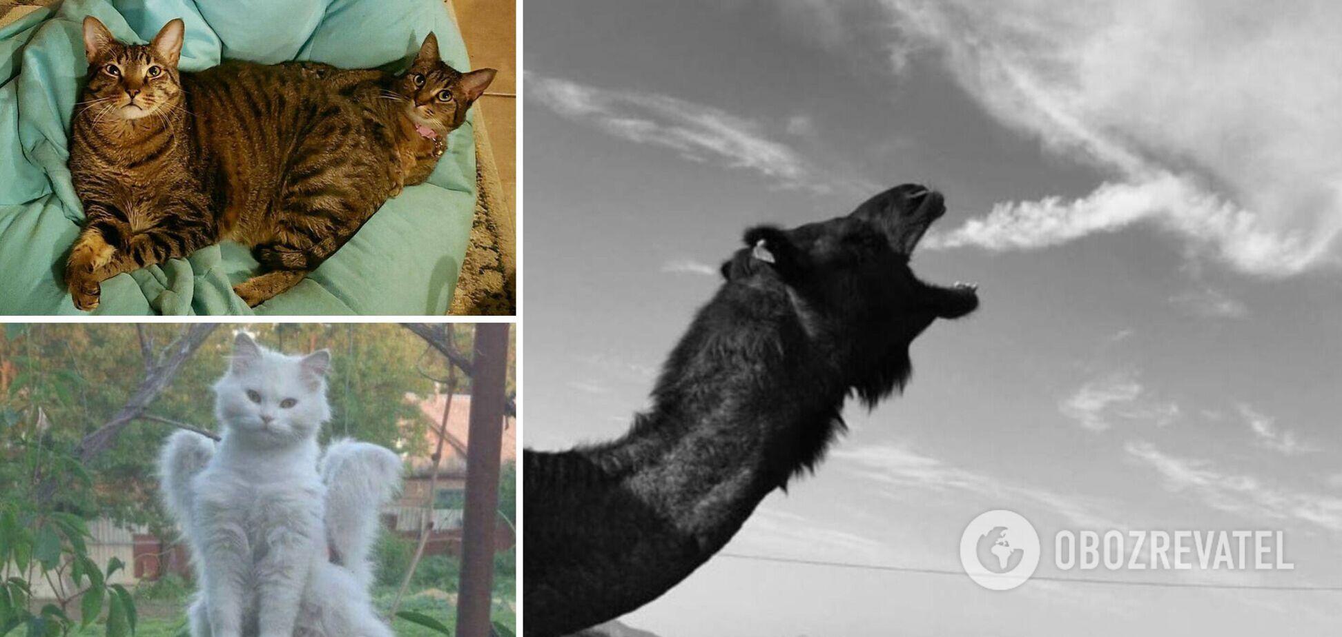 Животные часто попадают в объектив фотографов в забавной позе
