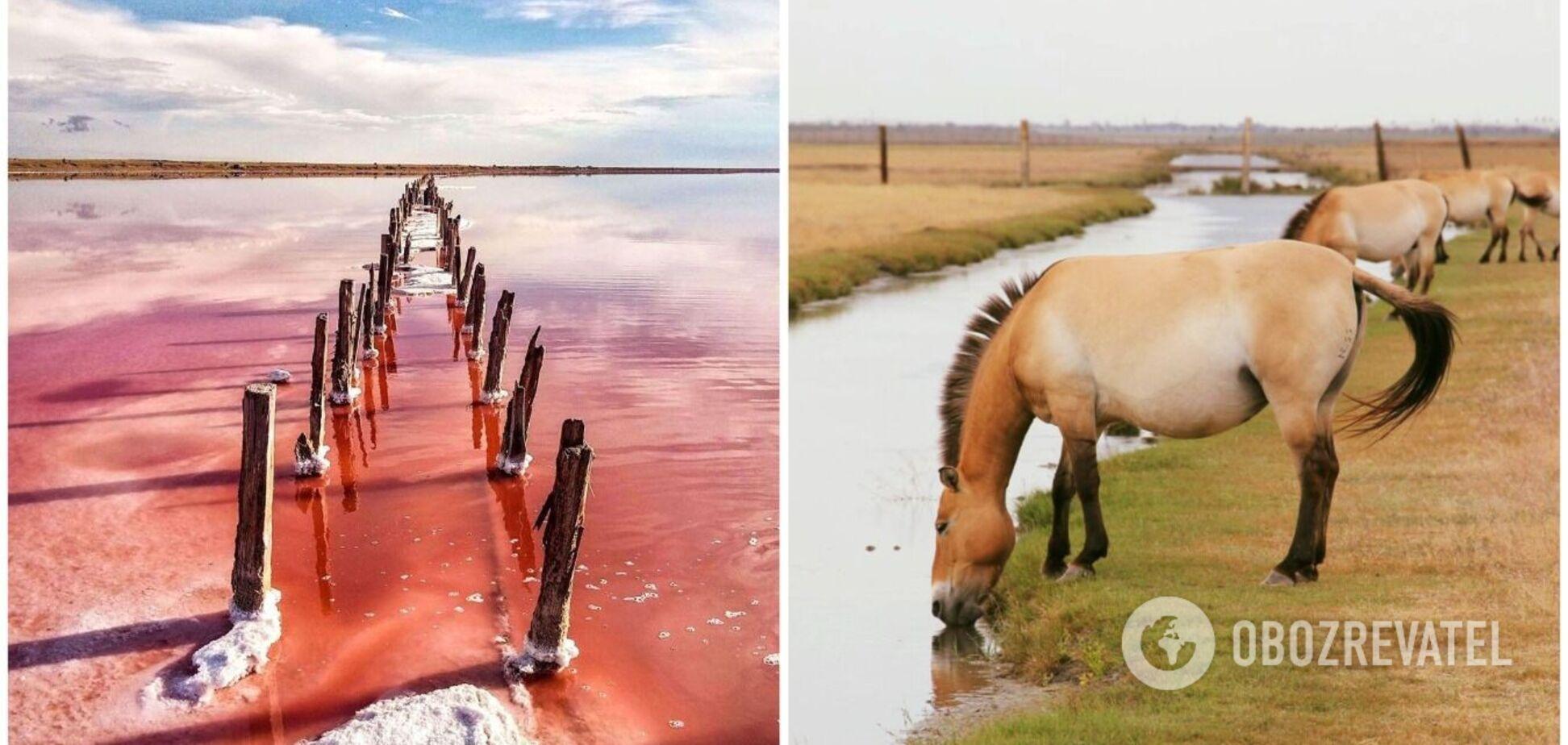 Пустеля, вітряки і рожеві озера: 5 місць у Херсонській області, які потрібно відвідати. Фото