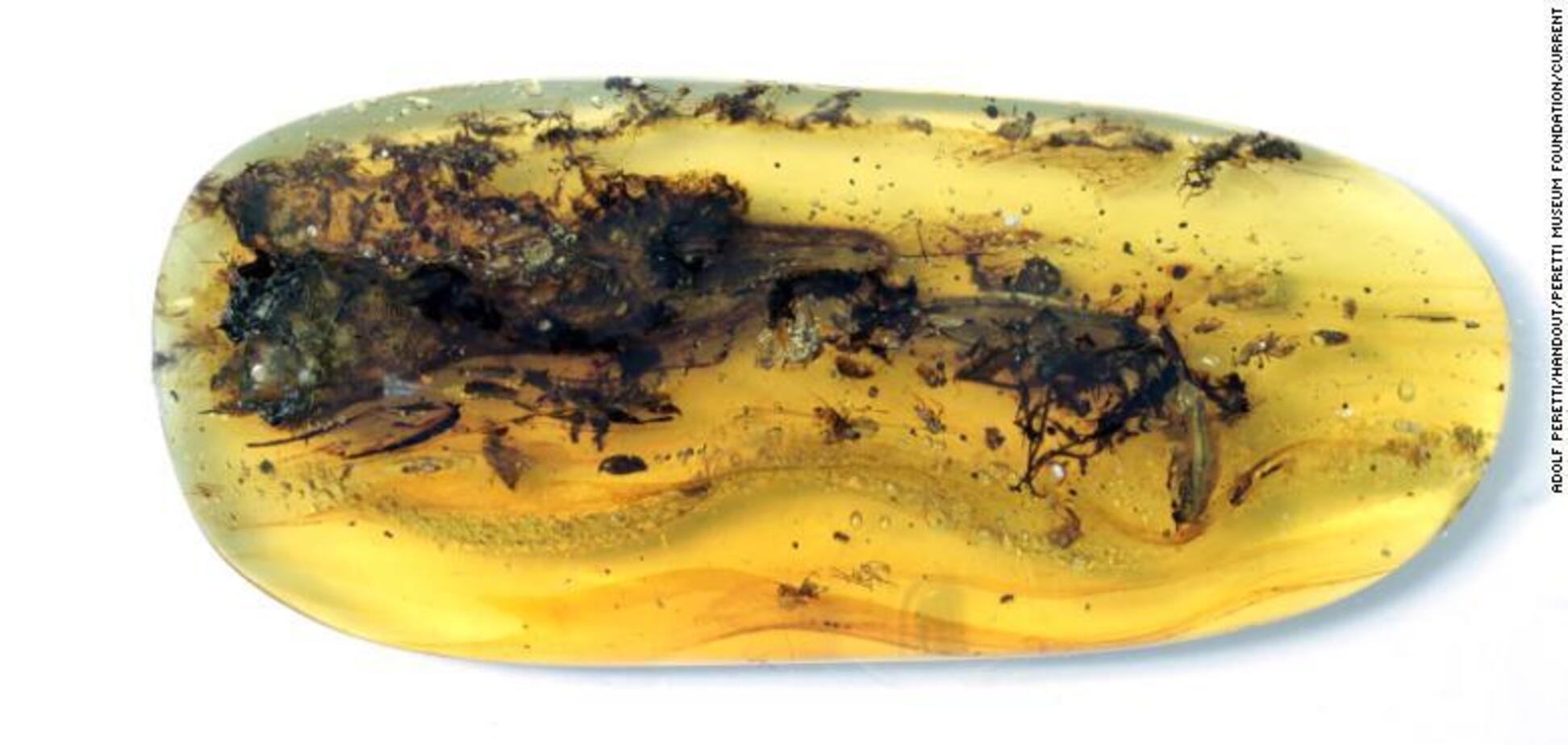 Череп 'самого маленького динозавра', найденного в янтаре, оказался останками уникальной ящерицы