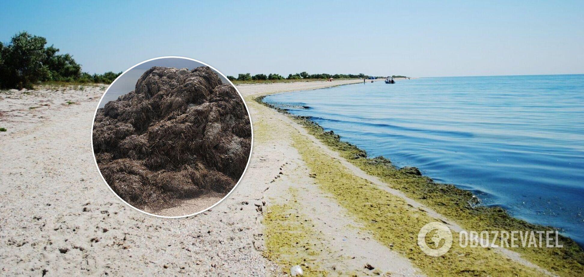 Неприємний запах і гори водоростей: популярний український курорт засмутив туристів. Фото