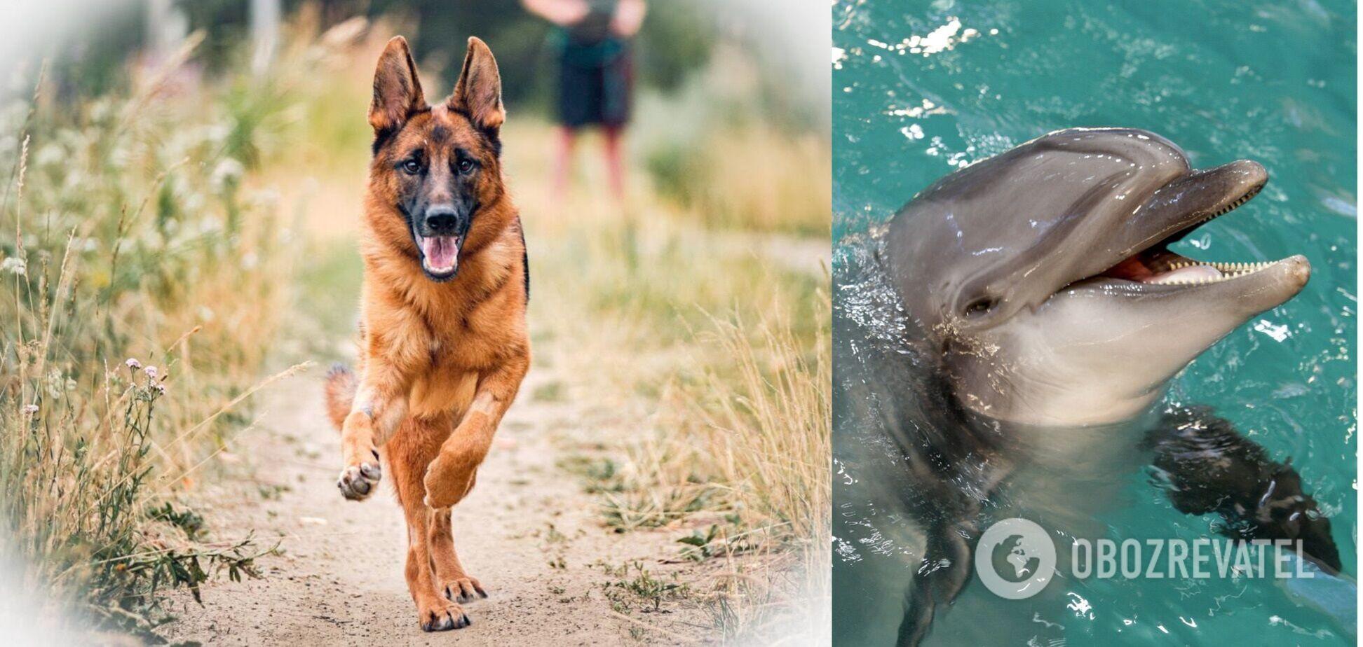 Реакція собаки на дельфіна потрапила на відео