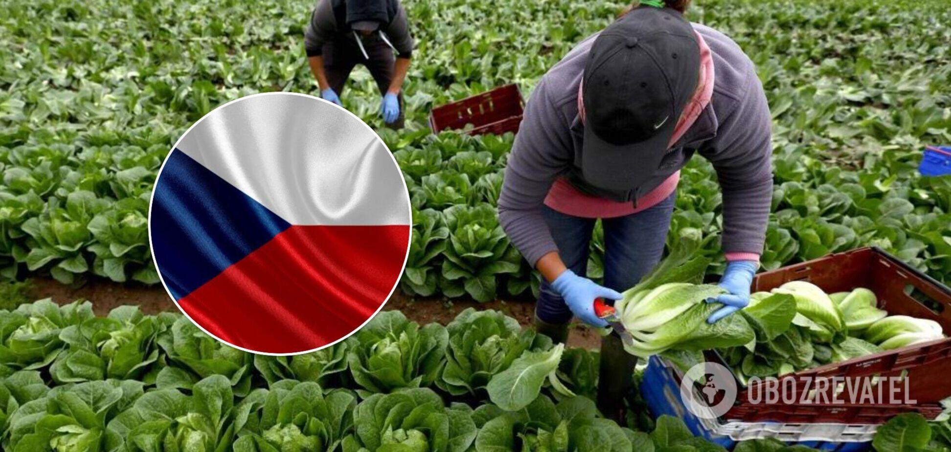 Українських заробітчан звуть на роботу в Чехію