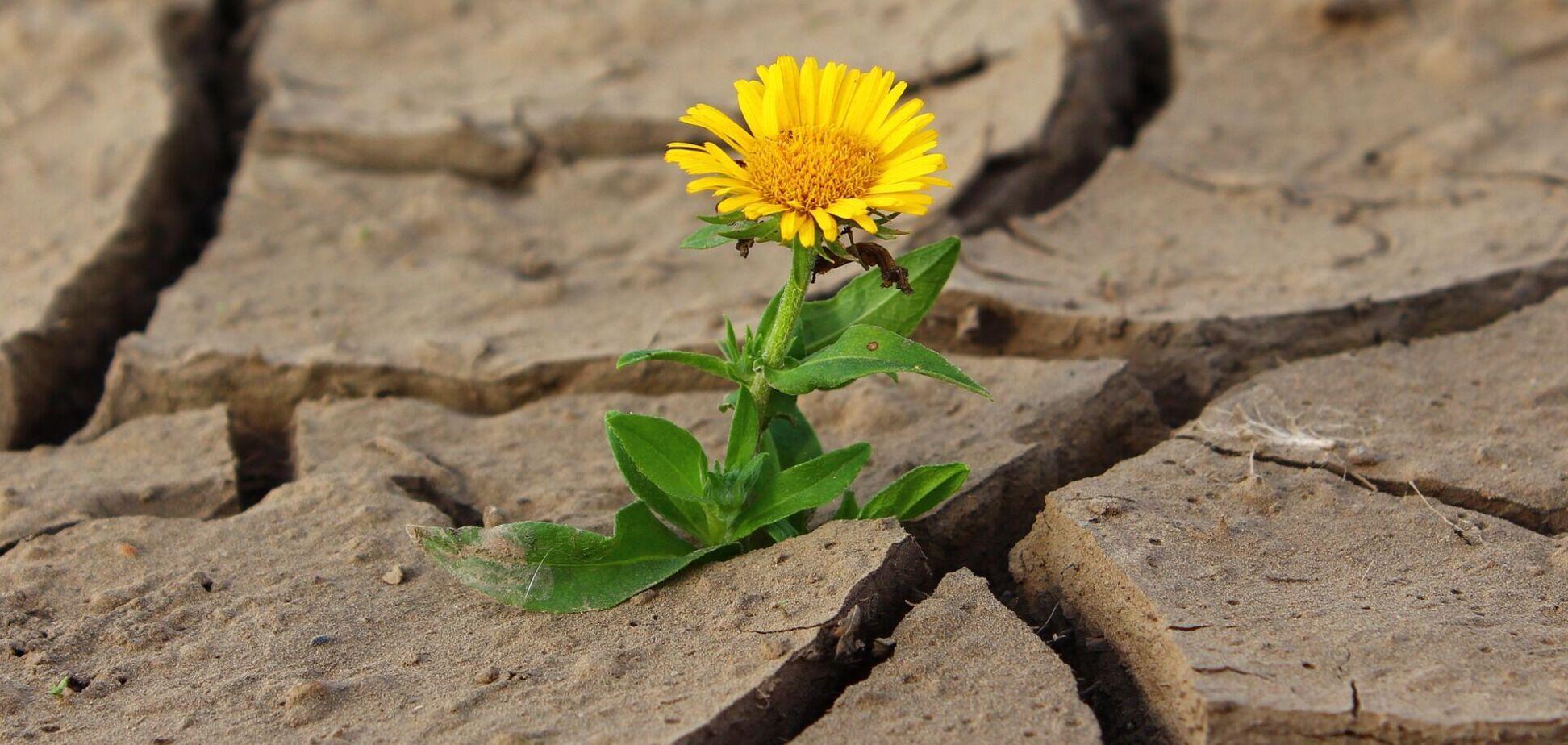 В ООН заявили, що посуха може стати 'наступною пандемією'
