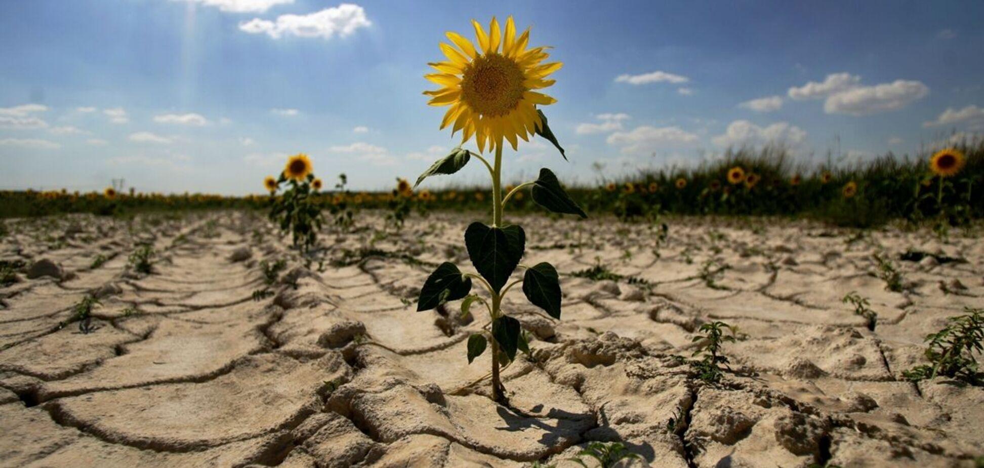 Украина вошла в топ-5 стран мира с наибольшим риском засухи. Всего проанализировали 138 стран