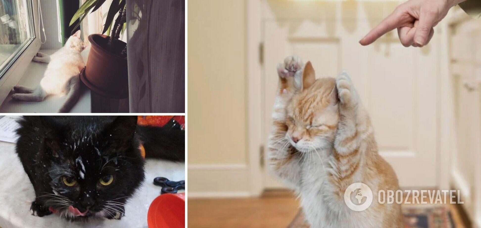 Главные враги котов – комнатные растения и туалетная бумага