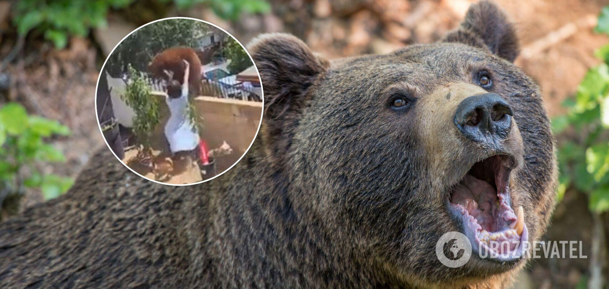 Каліфорнія, США, ведмідь