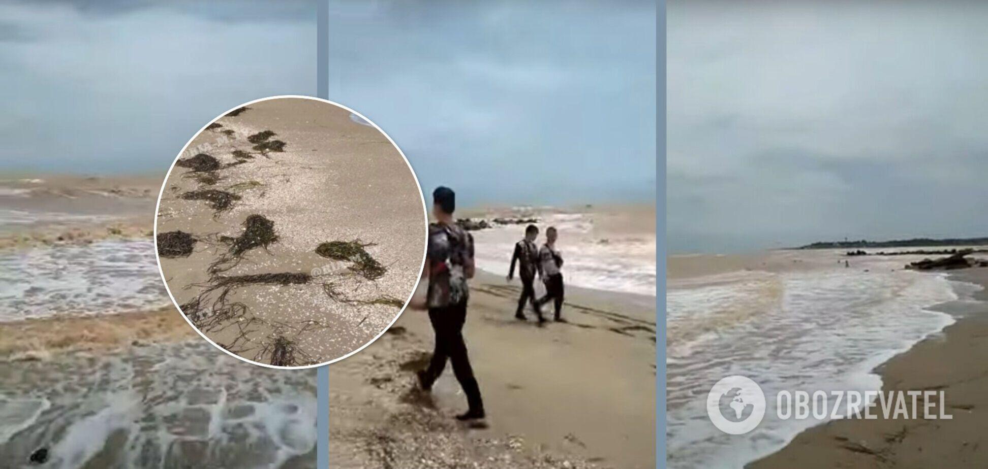 После шторма побережье популярного курорта в Украине 'усеяно' водорослями. Фото и видео