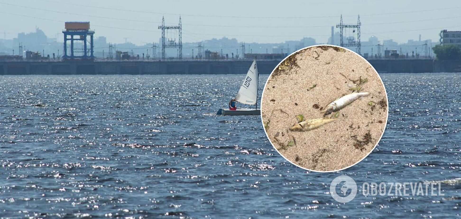 У водосховищі під Києвом зафіксували масову загибель риби. Фото