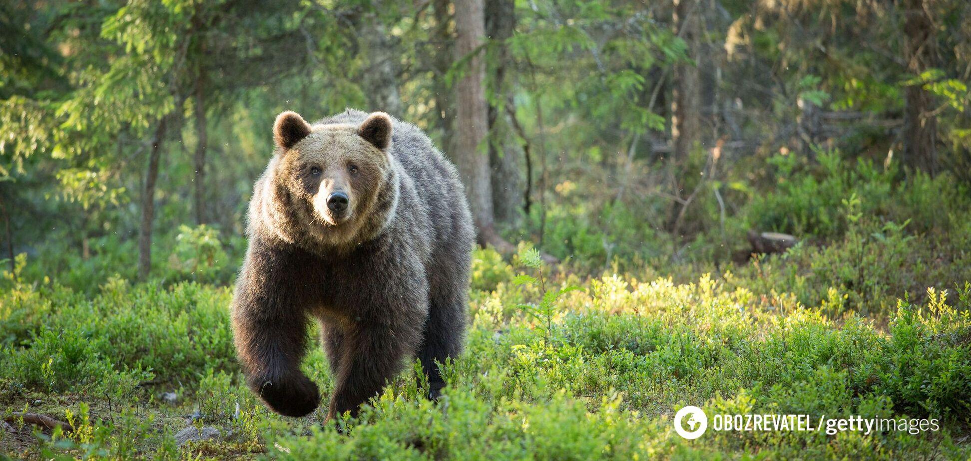 Медведь напал на группу туристов в России