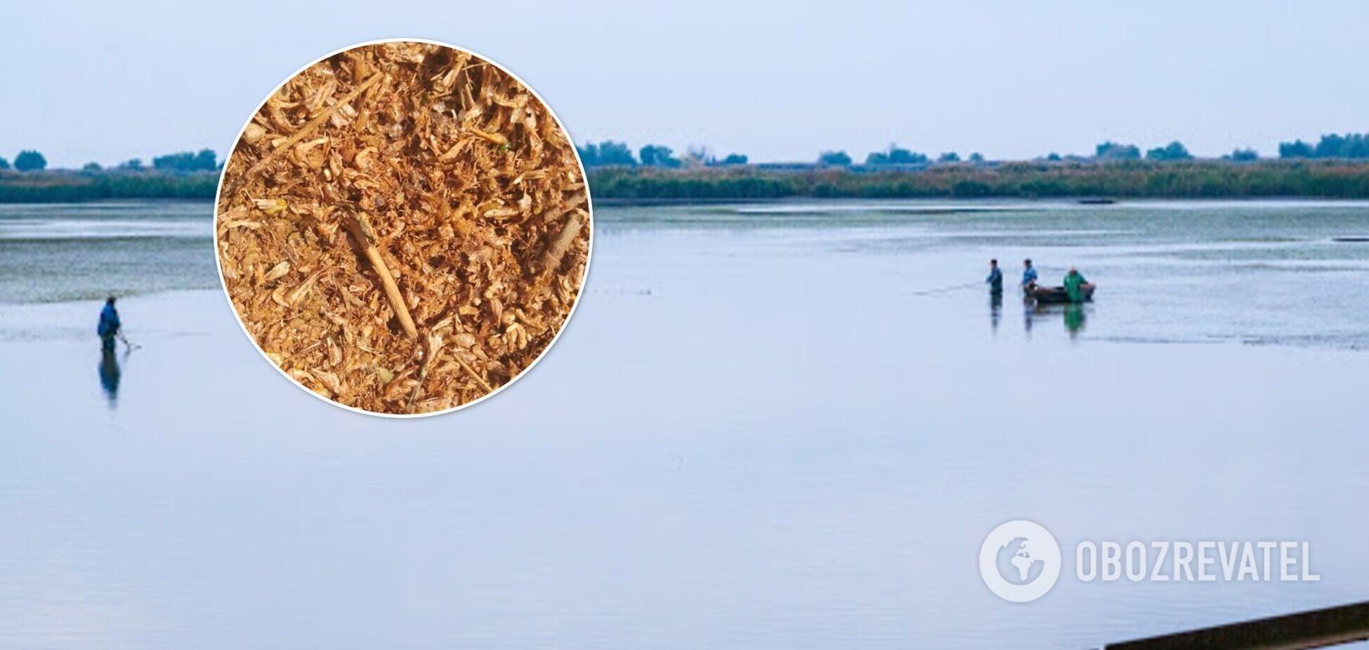 Под Одессой на берег выбросило тысячи мертвых креветок. Фото
