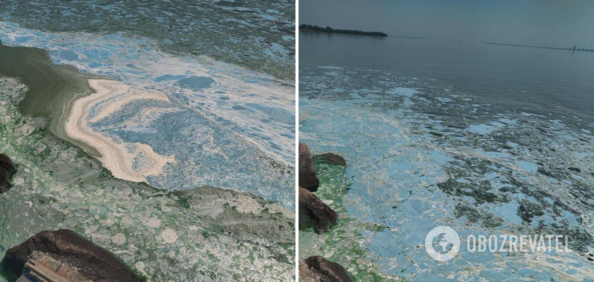 Каховское водохранилище превратилось в жижу из-за цветения водорослей. Фото и видео