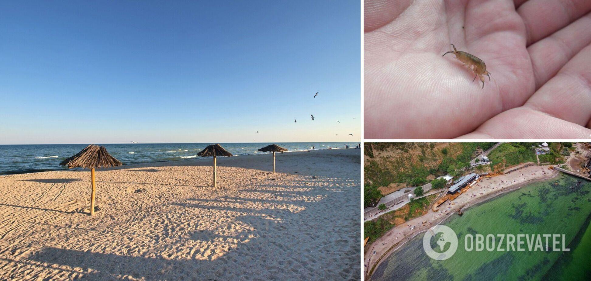 Отдохнуть можно дешево, но есть нюансы: туристы штурмуют Одессу, Бердянск и Кирилловку. Видео