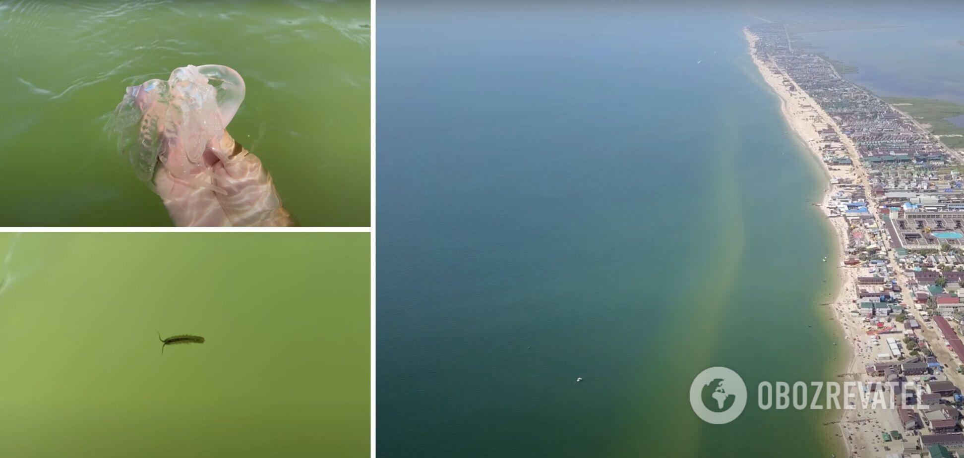 На Азовском побережье есть медузы и морские блохи