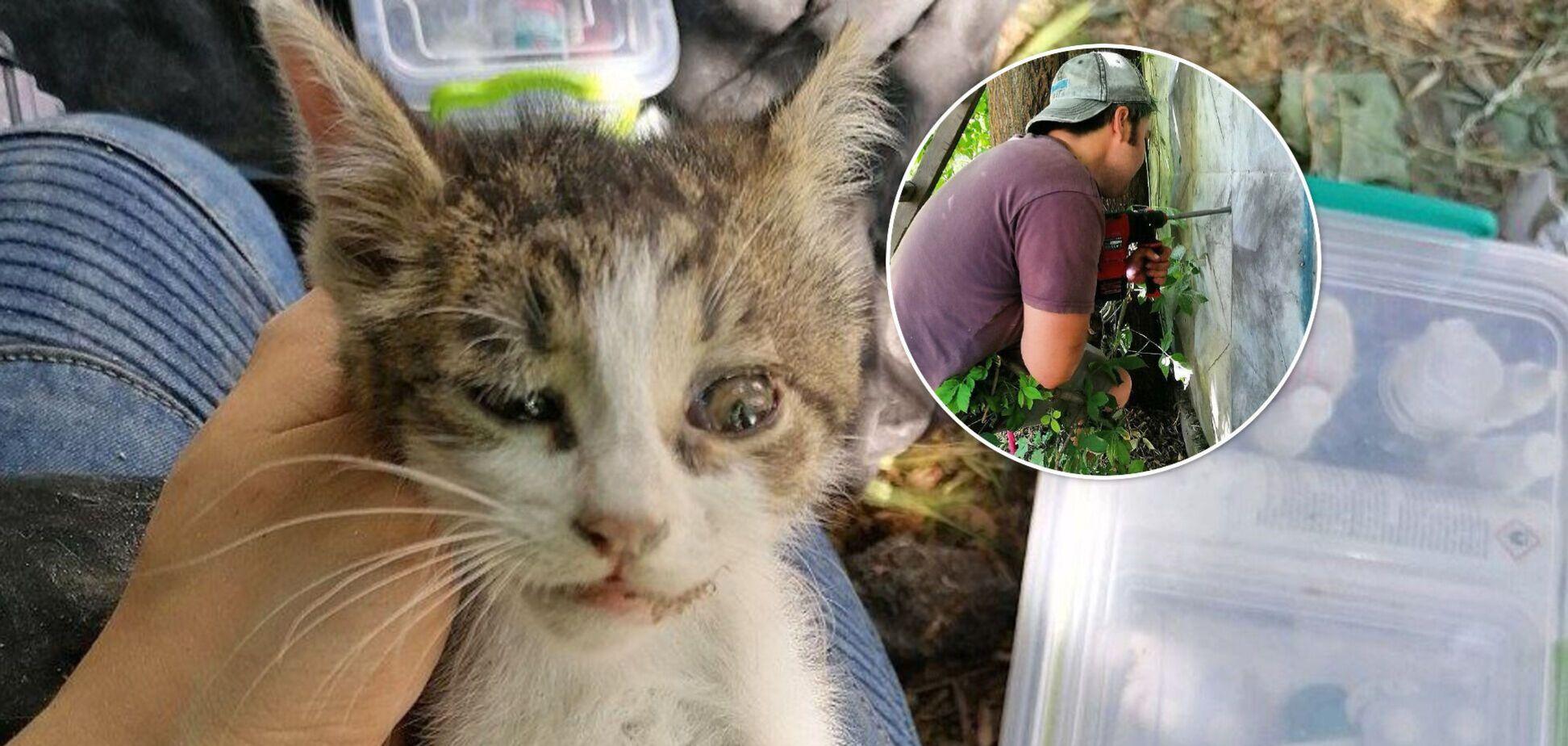 У Києві врятували кошеня, яке застрягло між бетонним парканом і гаражем: страждало кілька днів. Фото