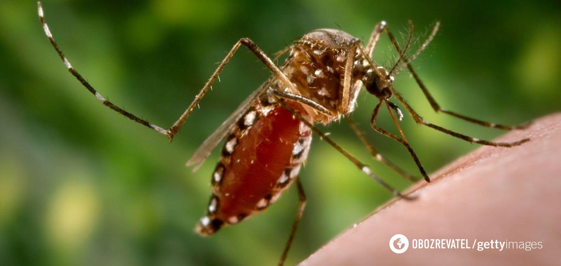 Комары переносят лихорадку зика, вирус денге: медик предупредила об опасности